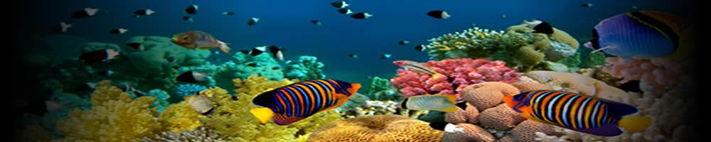 Curso Naturalista Subaquático