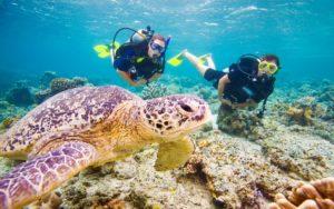 curso biologia marinha