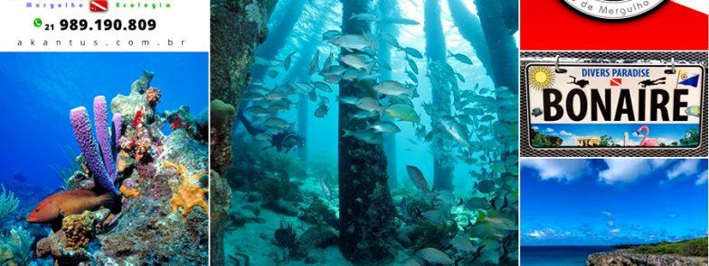 Bonaire – Outubro de 2018 – O Paraíso dos Mergulhadores com a Akantus