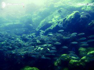 Lagoa Azul – Angra