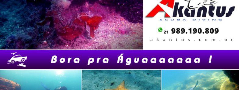 Mergulhos em Angra – 28 e 29 – OUT
