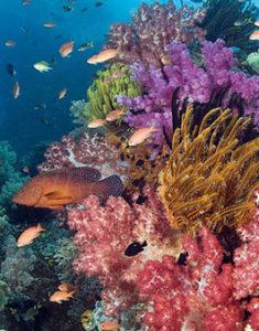 Conservação de Recifes de Corais
